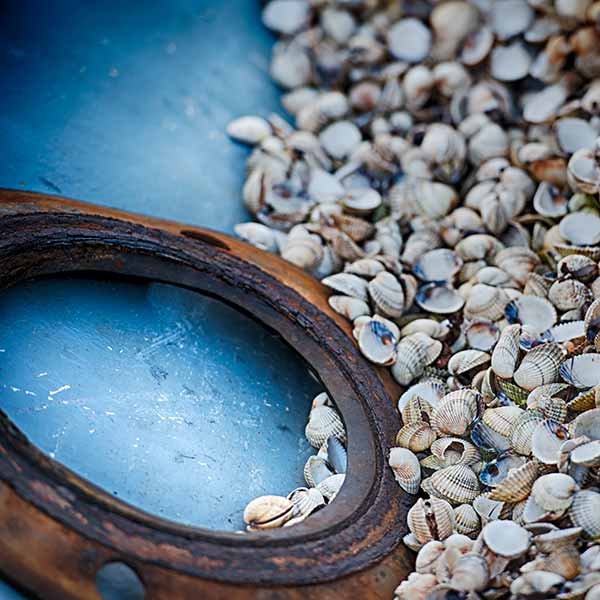 Introduction to photography shells