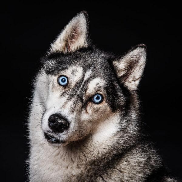 dog-photography-essex