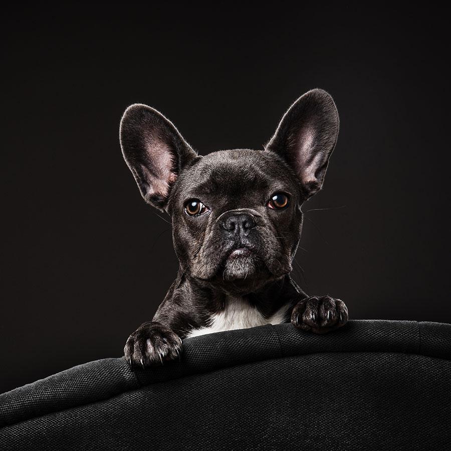 pet-photographer-essex