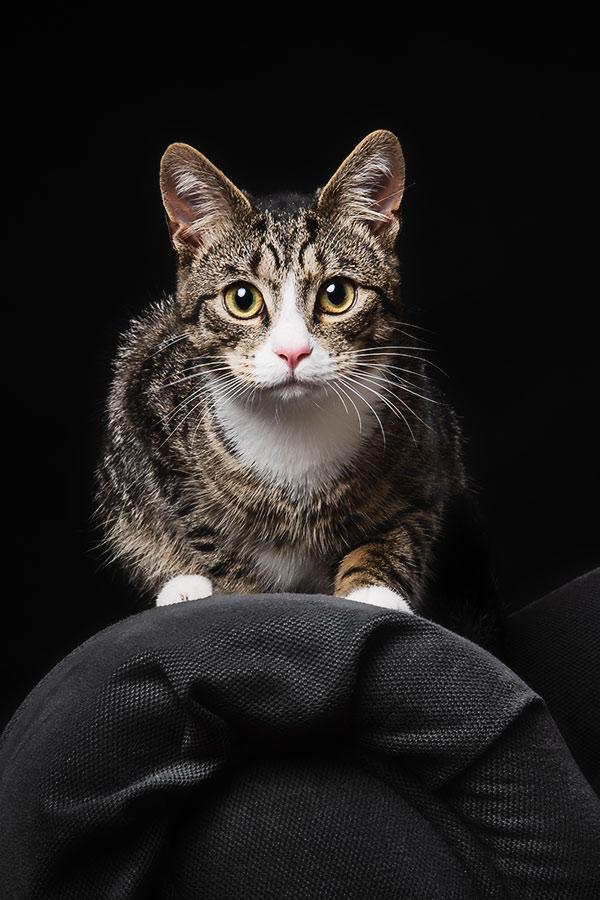 pets-cats-photographs